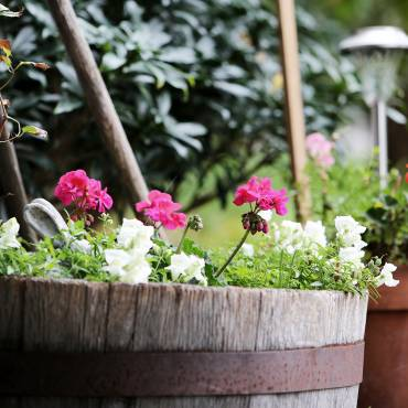 Simple Ways to Keep Your Garden Healthy